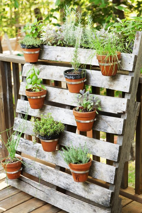 home garden potted plants