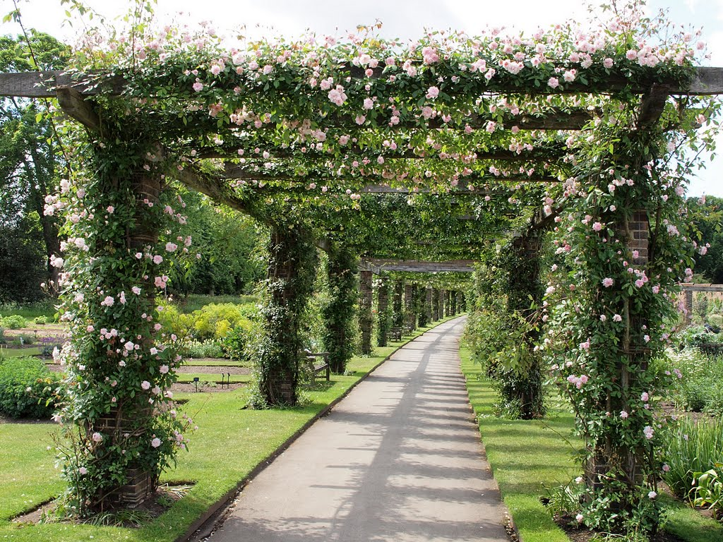 pergolas garden