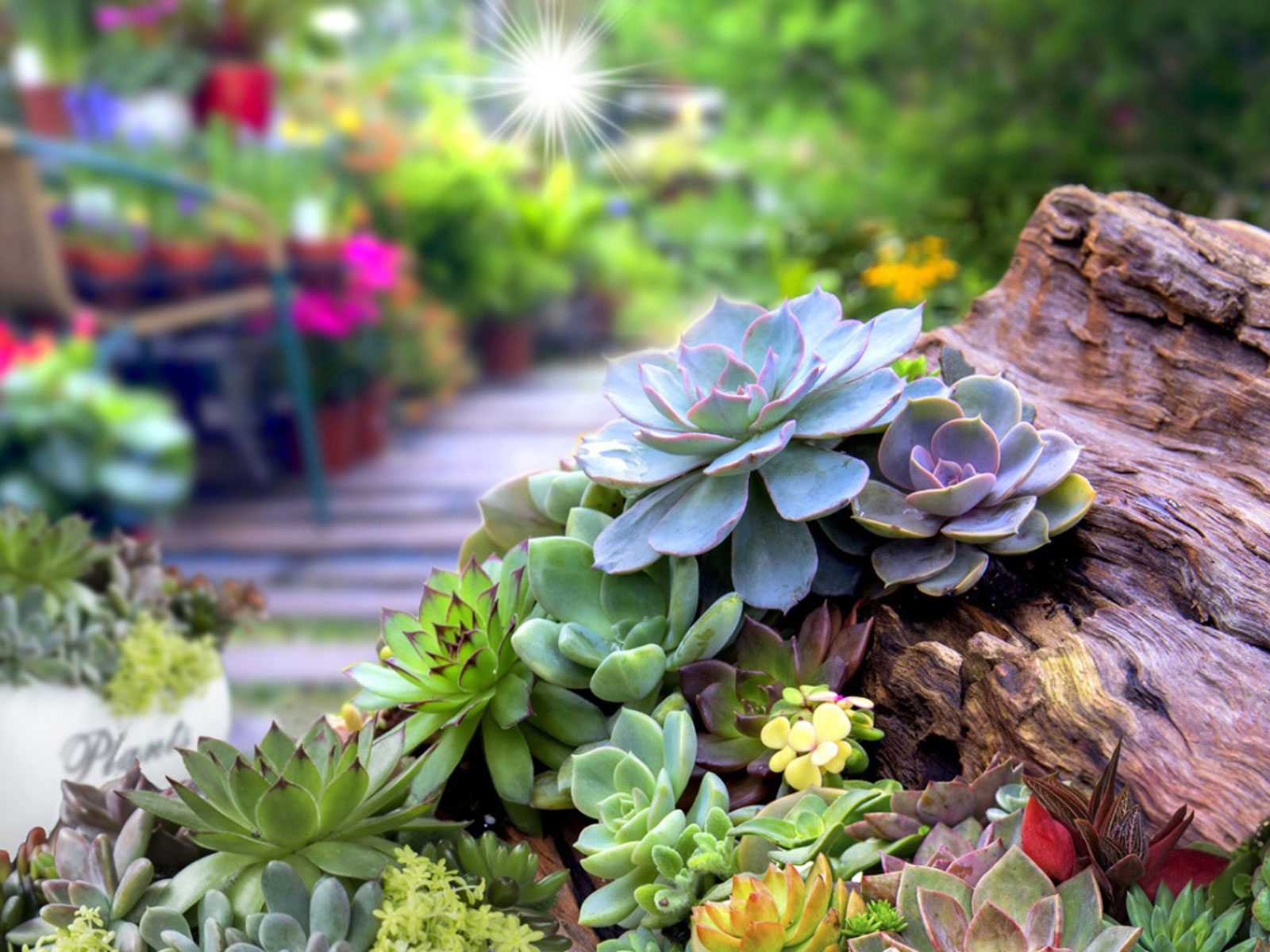 succulents garden design