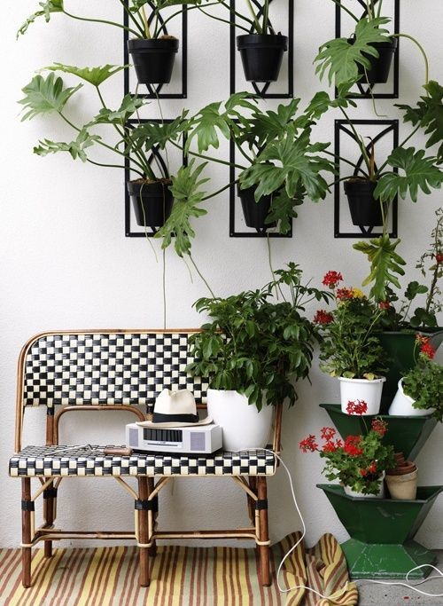 kitchen counter with plants